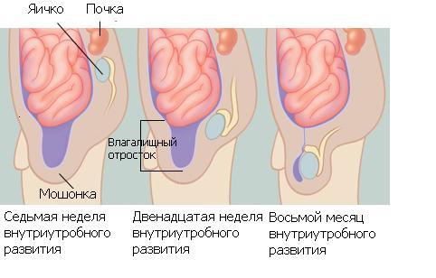 nashi-pevitsi-golie