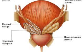 Лечение хронического простатита с помощью медикаментов