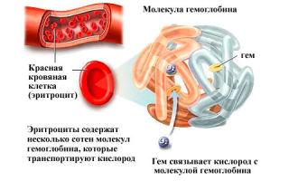Высокий уровень гемоглобина у мужчин: что делать