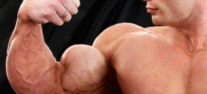 Как накачать мышцы рук в домашних условиях за неделю