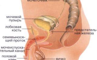 Почему появляются боли в мочевом пузыре у мужчин