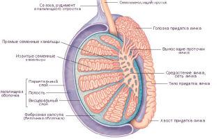 Боль и тяжесть в яичках у мужчин — причины и лечение