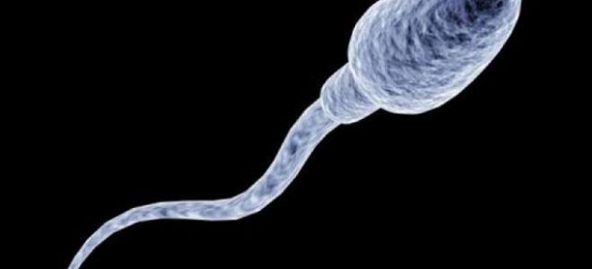 Сколько живут сперматозоиды в разных средах