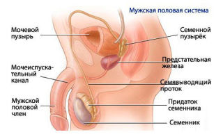 Как лечить гарднереллез у мужчин: симптомы и диагностика