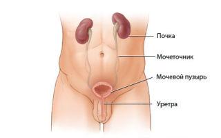 Причины воспаления и основные методы лечения мочевого пузыря у мужчин