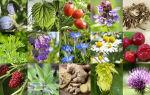 Полезные для здоровья мужчин травы