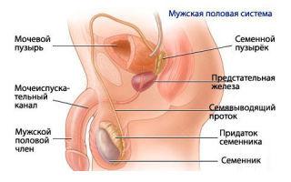 Как проводится лечение гарднереллы у мужчин
