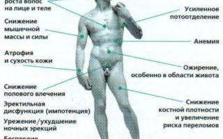 За что отвечает мужской гормон тестостерон?