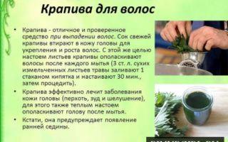 Применение крапивы для борьбы с сединой волос
