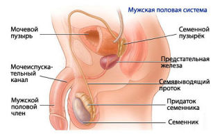 Причины и симптомы заболевания мочеполовой системы у мужчин