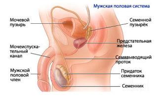 Вазэктомия как эффективный способ контрацепции