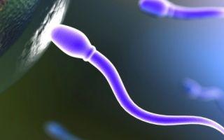 Как можно увеличить подвижность сперматозоидов