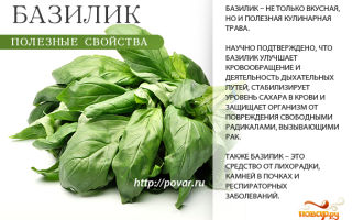Полезные свойства базилика для здоровья мужчин