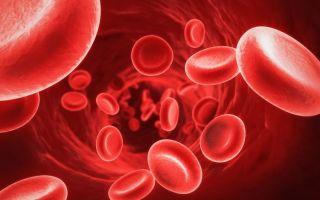 Гемоглобин у мужчин — норма по возрасту (таблица)