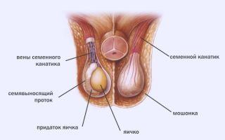 Невыносимая боль в яичках у мужчин — в чем ее причины?