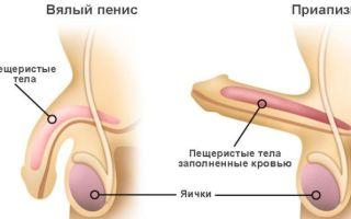 Какими бывают травмы полового члена?