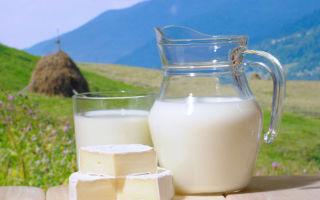 Польза и вред молока для мужчин