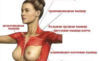 Эффективные упражнения для увеличения грудных мышц для мужчин