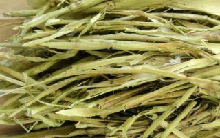 Как применяется кора осины при аденоме простаты
