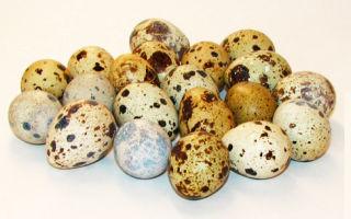 Перепелиные яица в рационе: польза для здоровья мужчин