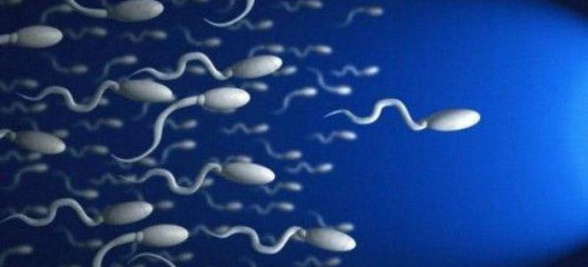 Из чего состоит мужская сперма: состав и свойства