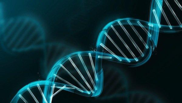 генетическая днк