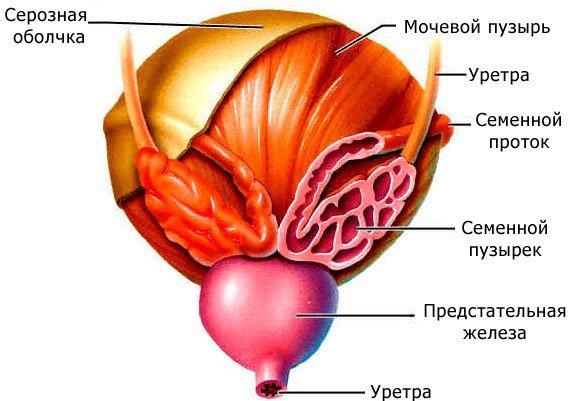 паталогия мочевого пузыря