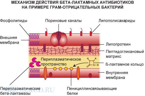 Бета-лактамы