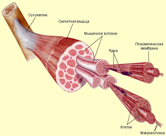 микротравмы