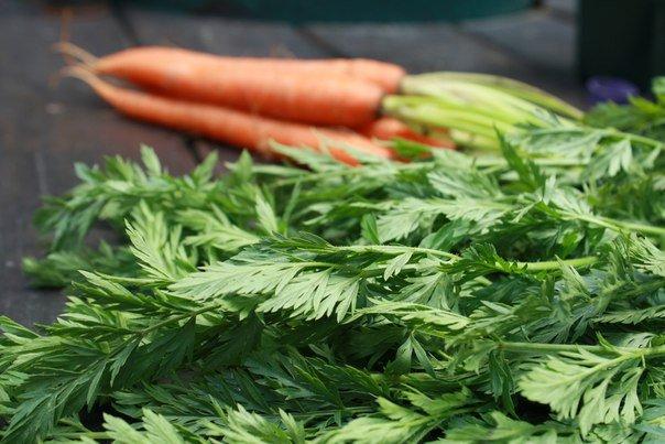 Отвар моркови
