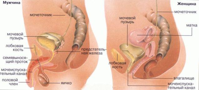 сравнение мужской и женской болезни