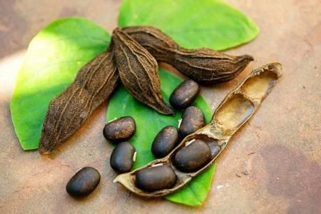 Плоды Мукуны