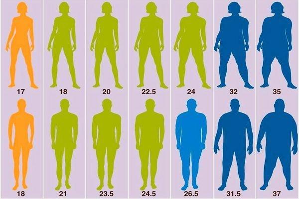масса тела