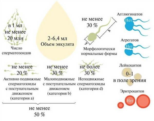 информация о мужском эакулянте