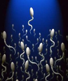 Из чего состоит женская сперма