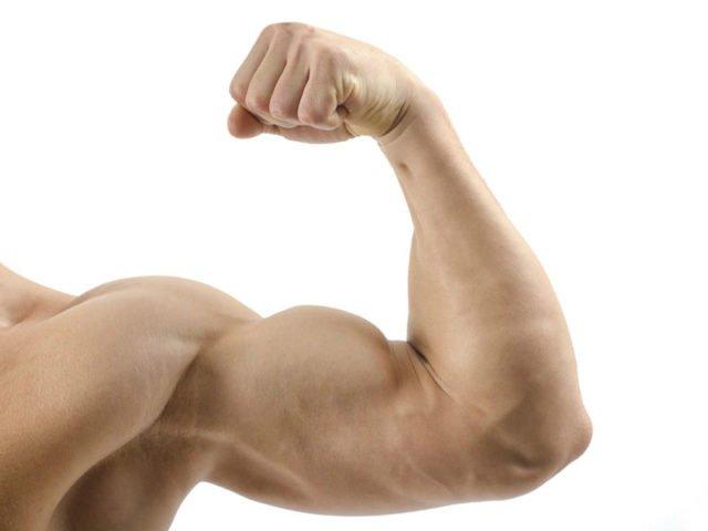 У худых при наборе веса увеличивается половой член