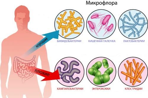 Enterococcus faecalis (энтерококк фекальный)