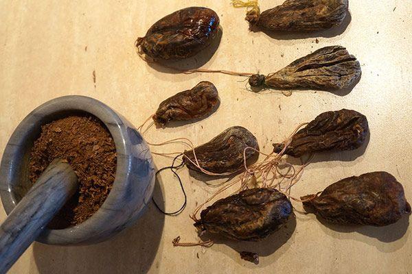 сушёная бобровая струя
