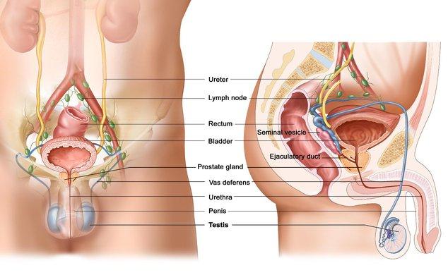 Почему у мужчины выделяется мало спермы (олигоспермия): причины и методы лечения гипоспермии