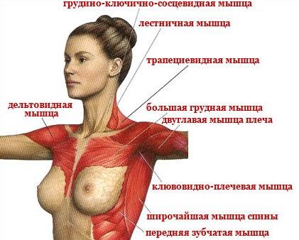 Упражнения на грудные мышцы: лучшие тренировки для мужчин