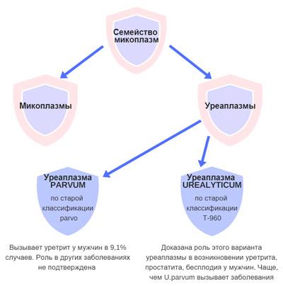 Уреаплазма гарднерелла лечение