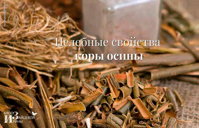 Кора осины при простатите ⋆ ТОП эффективных рецептов ⋆