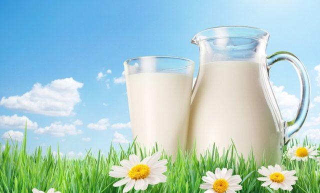 Обычное козье молоко и его польза для мужчин