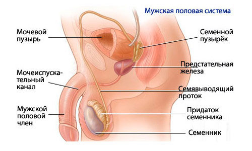 Как лечить воспаление мочеполовой системы у мужчин