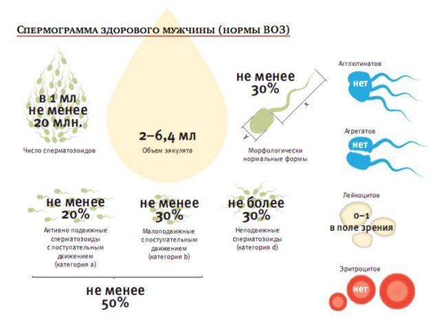 Что такое нормоспермия у мужчин: причины, исследование, отзывы