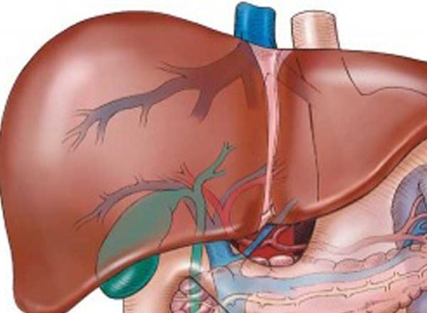 Цирроз печени симптомы у мужчин асцит