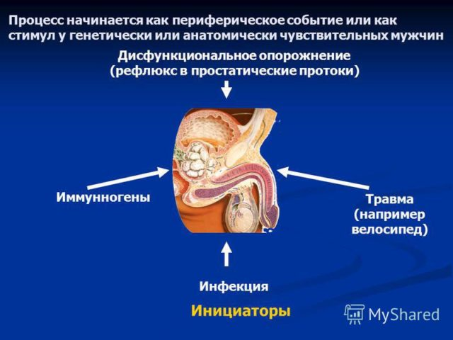 Хр простатит схтб лечение чабрецом простатита