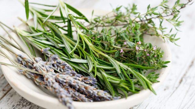 Травы для лечения бесплодия и патологий беременности