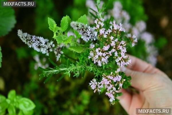 При бесплодии эффективно лечение травами