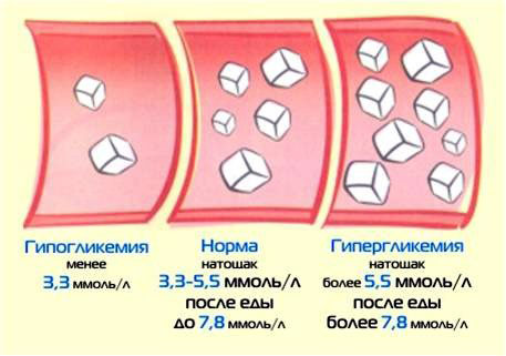Глюкоза в сыворотке крови норма у мужчин
